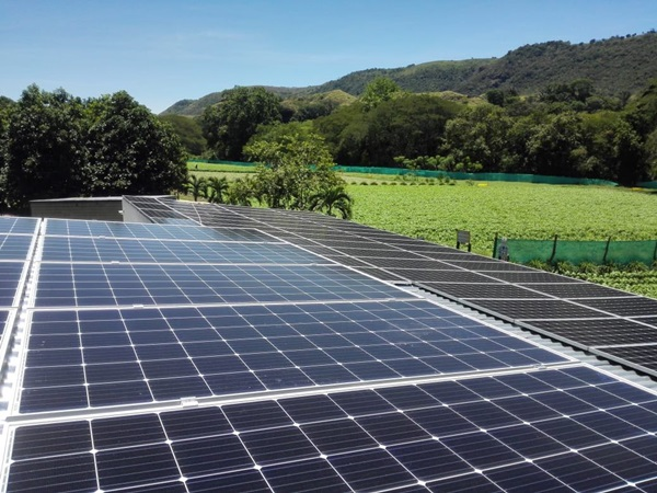 Energia renovable en Tolima / Foto Puerto Vallarta Herbs