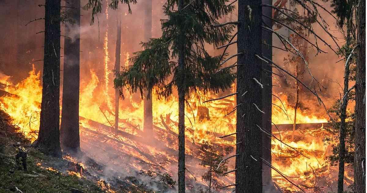 La deforestación vía incendios está afectando la calidad del aire de Bogotá y otras ciudades / Foto Pixabay